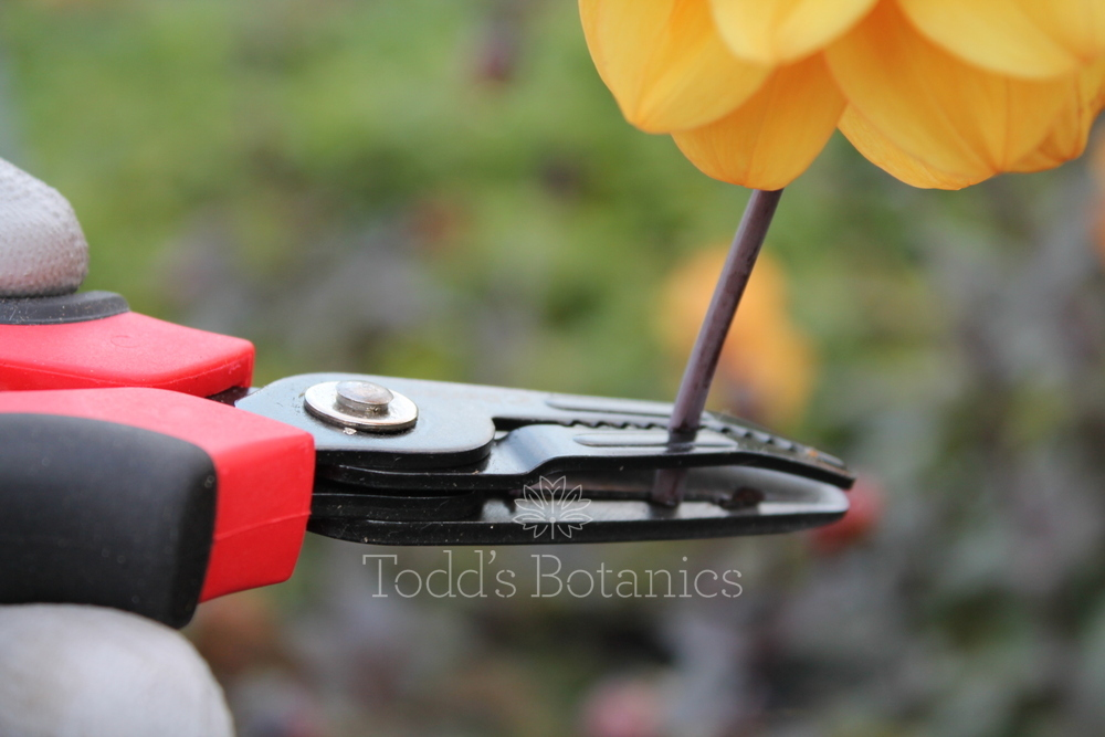 Gardening tools cut and hold flower secateurs for Gardening tools secateurs