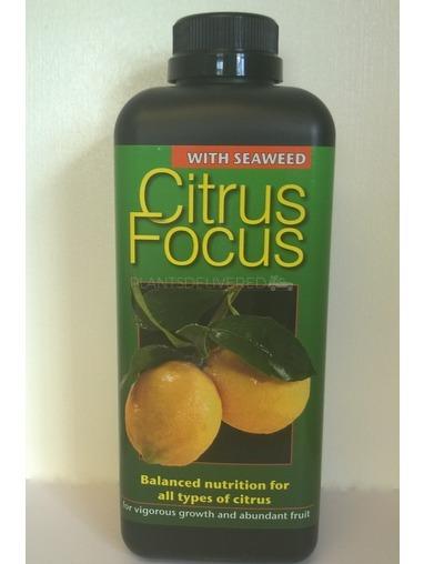 Citrus feed.