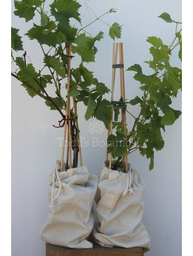 Gift Wrapped Grapevine Set