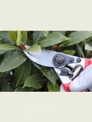 Expert Bypass Pruner - Great Secateurs