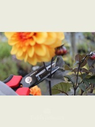 Cut and hold Flower Secateurs