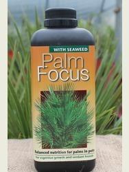 Palm Focus