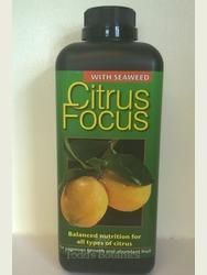 Large Citrus Kumquat