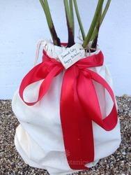 1ft Tree Fern Gift